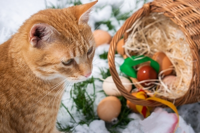 Velikonoce, Pascha nebo Semana Santa?
